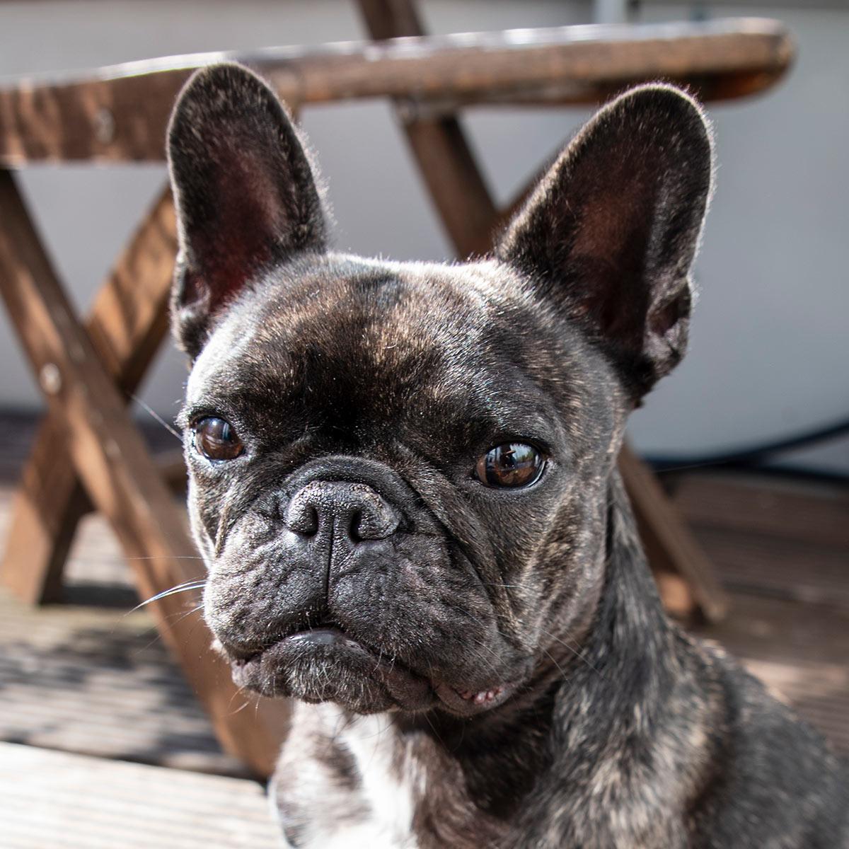 Foto Agenturhund Klärchen