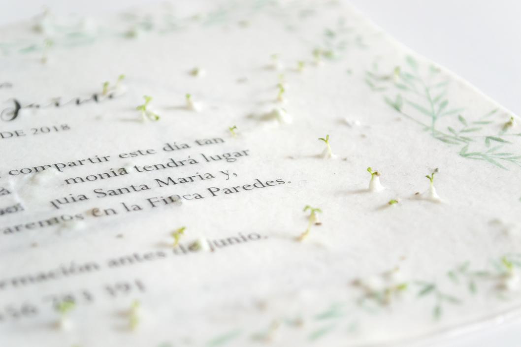 Papier mit Pflanzensamen